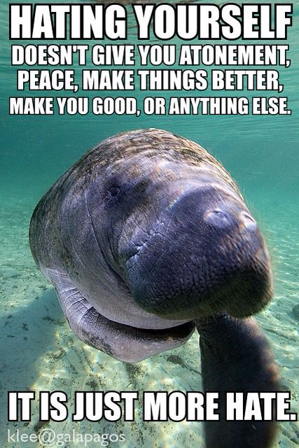 cb6a48edad0d2d9529ccaacb1fdc1580 life motivation wide awake 29 best motivation from manatees images on pinterest manatees
