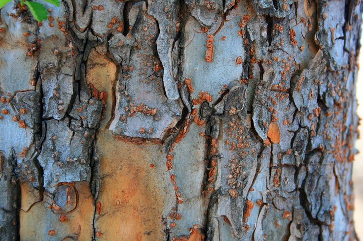Crusty Tree Bark