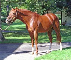 Secretariat(1970)Started His 3 YO Year With Wins In The Bay Shore And Then The Gotham Going Wire To Wire In 133.2. Ran 3rd In Wood, Then Won Triple Crown Setting Track Records In All Three Races Which Still Stands Today(159.2, 153.2, 224). Finished 1973 With A Record of 12 Starts 9 Wins 2 Seconds 1 Third. Champion 3 YO And Horse Of The Year