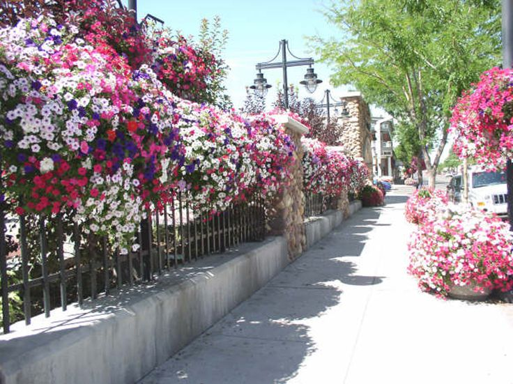 Smaller towns, like Vernal, Utah, (population 9,200) also know that having great flowers is good for business. More than 1500 planters and hanging baskets filled with petunias and other cultivars line their main street (photo middle below - Cobblerock Park, Vernal, Utah). Their planting program is so popular that residents sign up in September to help on the city's planting day the following May.