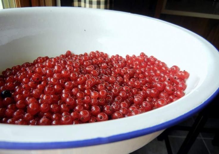 Better Nutritionally Than Blueberries ~Growing Aronias, Elderberries, and Currants