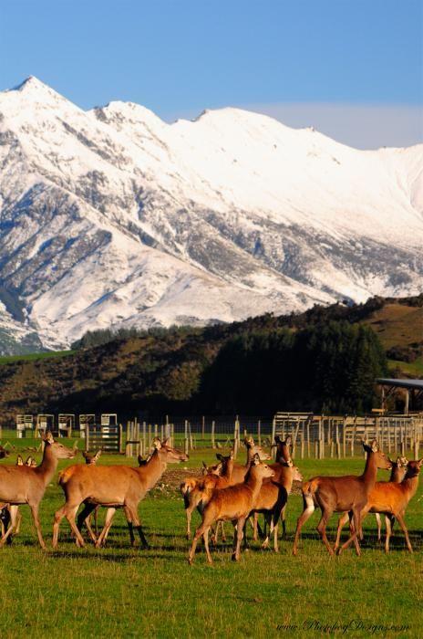 Otago, South Island, New Zealand