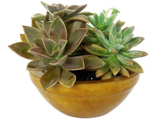 Concrete planter for succulents.