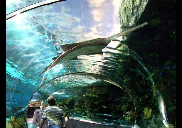 Great smokey mountains aquarium in Gatlinburg, Tennessee Nice tunnel to view the sharks etc. also, pet the stingrays in a huge pool here! They swim by so fast and brush under your hand resting in the water... Cool!