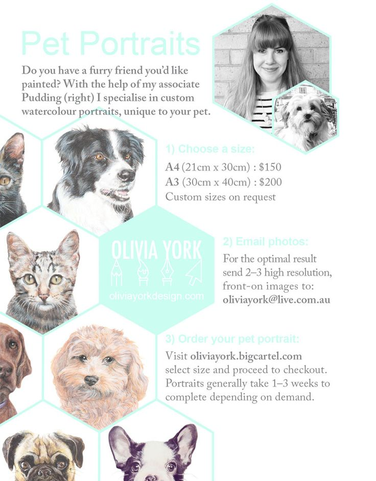 3 easy steps to your pet portrait