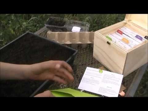 1 Kitchen Garden Box Plant Seeds - YouTube