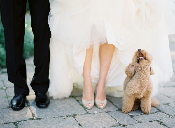 Oh my goshhhhhhh. Husband, wife, and pup!!!!! So happening with bella