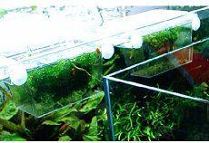 Tropical Fish Breeding | Aquarium Accessories - How Can We Help You?