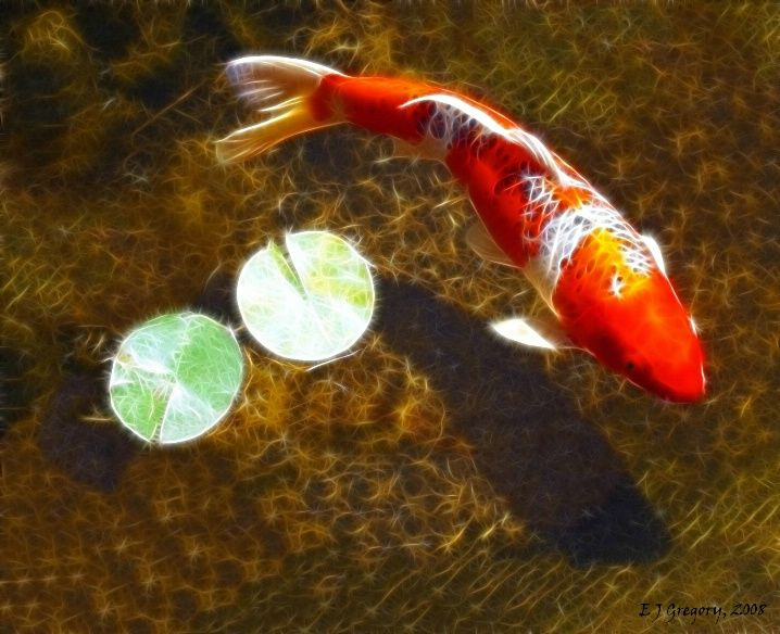 316 best koi pond images on pinterest koi ponds water for Big fish little pond