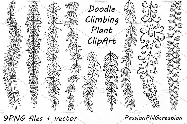Doodle Climbing Plant ClipArt in 2020 Plant doodle, Easy
