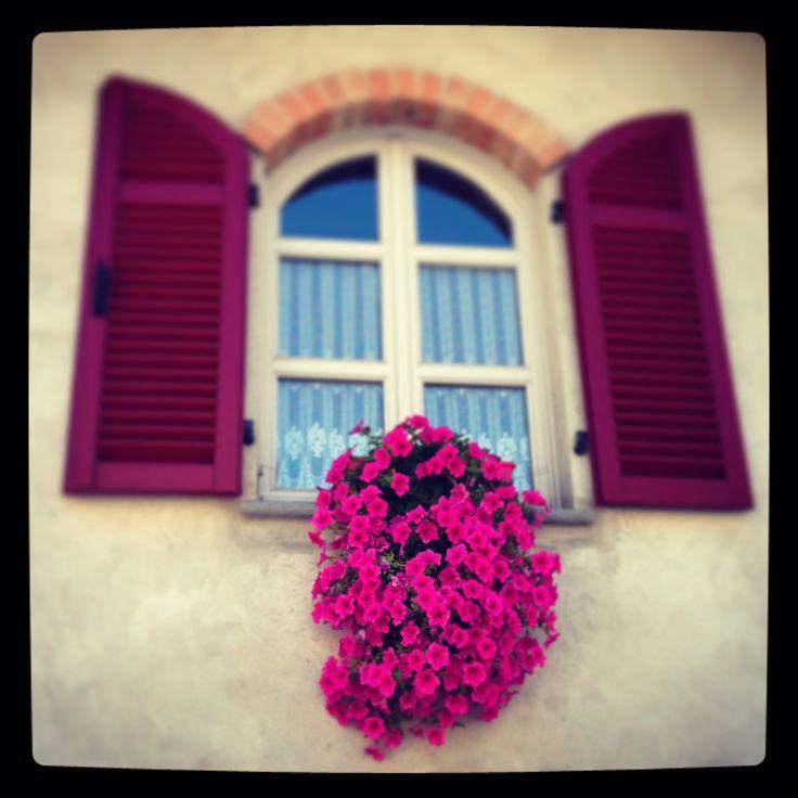Flowers Piemonte Italy Barolo