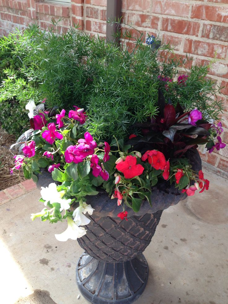 17 best images about front steps on pinterest gardens for Flower pots with plants