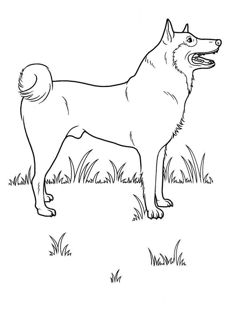 adult and teenager coloring pages of dogs