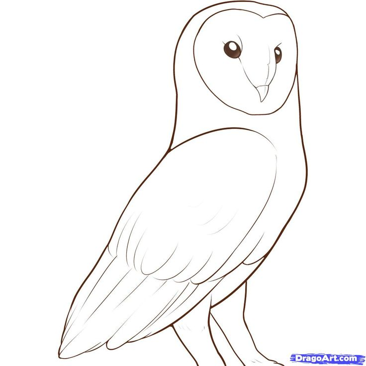 Line Art Step By Step : Http imgs steps dragoart how to draw a barn owl step