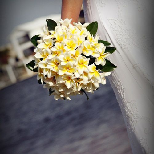 Frangipani bouquet! good idea, im sure it would cost nothing at all....a local flower for me. Google Image Result for http://www.australiaentertains.com.au/wp-content/Frangipani-bouquet.jpg