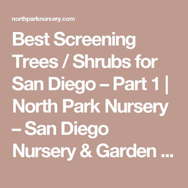Best Screening Trees / Shrubs for San Diego – Part 1 | North Park Nursery – San Diego Nursery & Garden Center