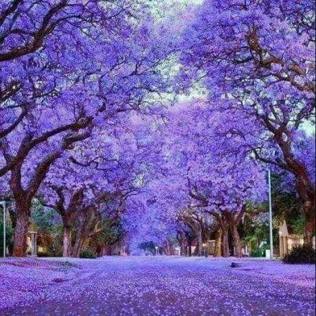 October in Pretoria, South Africa