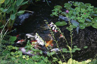 Blue heron scarecrow pond solution pittsford monroe for Koi pond protection