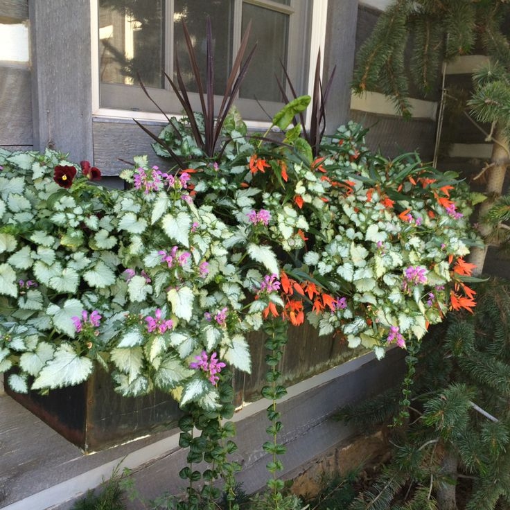 Lamium Begonia Pansy PoppyContainer Garden Design JK