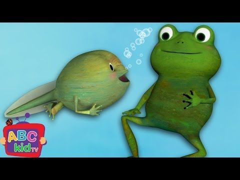 290974825919385986 on Life Cycles Of Frog
