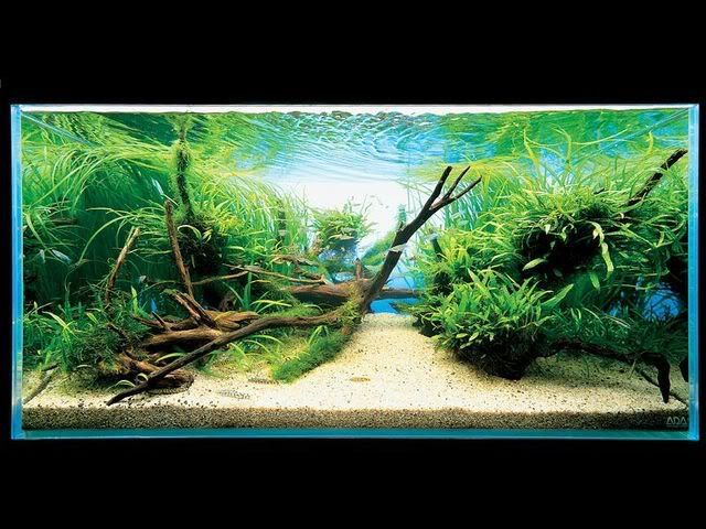 aquarium aquascape design ideas 263 best fish images on pinterest planted aquarium aquarium