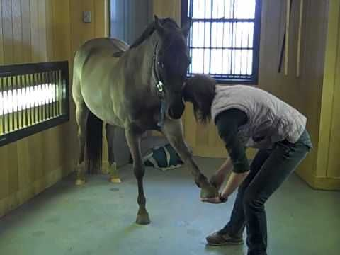 Equine Massage Therapy Techniques