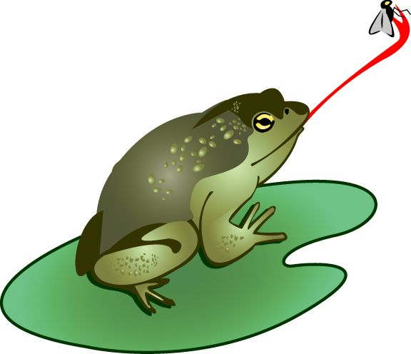 1000 Images About Frog Unit Study On Pinterest Frog