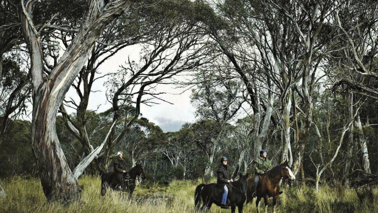Horse ridging in Victoria High Country in Australia [Source: Country Style AU, Jul 2012]
