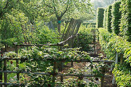 Potager (ornamental vegetable/kitchen garden) - Prieuré de Notre-Dame D'Orsan, Maisonnais, France