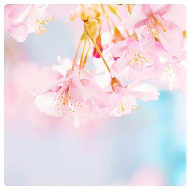 【tankgrw】さんのInstagramをピンしています。 《「サクラサク」といいね。 若者に意味通じるのかな?  #さくら #桜 #sakura #cherryblossom #キャノン #canon #kissx4 #eoskiss #ig_photooftheday #IGersJP #東京カメラ部 #team_jp_ #team_jp_東 #instagramjapan #ファインダー越しの私の世界 #reco_ig #Loves_Nippon #wu_japan #wp_japan #indies_gram #hueart_life #as_archive #Japan_Daytime_View #bestjapanpics #jp_gallery #ray_moment #はなまっぷ #wp_flower  撮影地:東京都中野区》