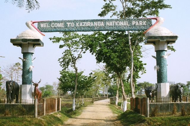 Right from Kaziranga National Park to various tourist places in India and many other destinations, plan your family holidays with Pii Tours and Travels.