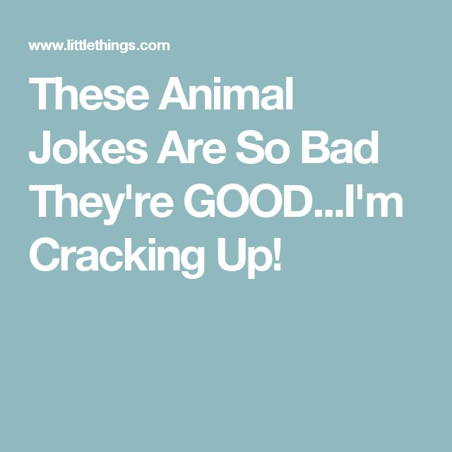 These Animal Jokes Are So Bad They're GOOD...I'm Cracking Up!