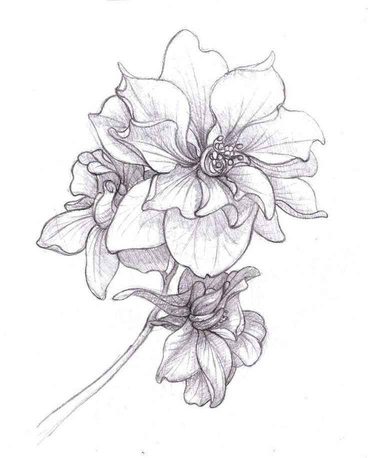 larkspur drawing July birth flower - Google Search