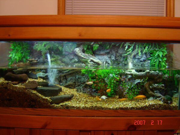 The perfect turtle tank setup!