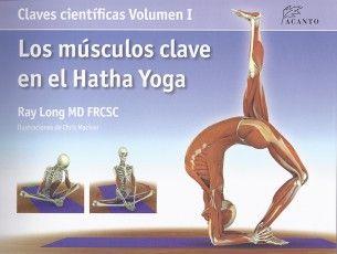Músculos clave en el Hata yoga