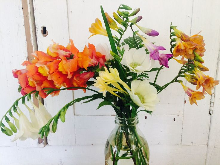 First day of Spring and look what popped up! Fragrant Freesias, Snapdragons and Anenome #spring #flowers #localflowers