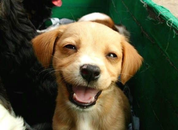 Not my dog but this one could eat my favorite shoes if he smiled like this afterward : )