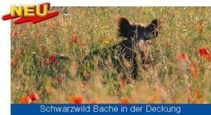Saatgut und Mischungen für den Wildackeranbau | Wildackersaaten