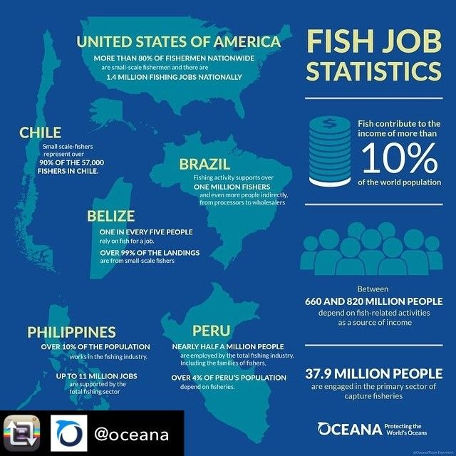 Wow !!  Repost from @oceana using @RepostRegramApp - When you think of the oceans, you might think of waves, whales and long days at the beach. But the oceans are also a major source of income for millions of fishers around the world.  Take a look at this #infographic to learn some surprising statistics about fishing jobs in Oceana member countries.  Click the link in our bio to see a full-sized version. : © Oceana/Rosie #Oceana #SaveTheOceans #ProtectTheOceans #Oceans #MarineLife…