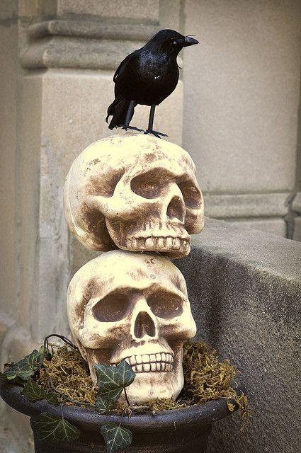 SkullPlanter2 | Flickr - Photo Sharing!