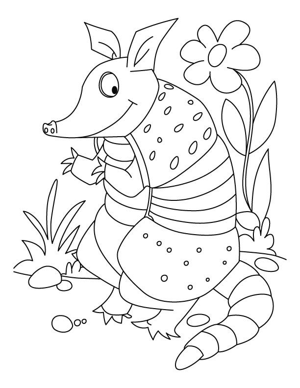 Animal Printable Armadillo Coloring Pages