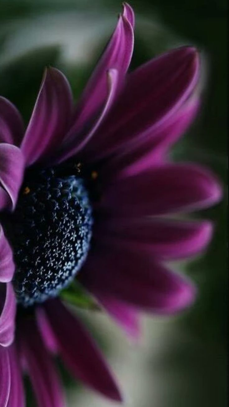 17 Best ideas about Purple Flowers on Pinterest | Purple ...