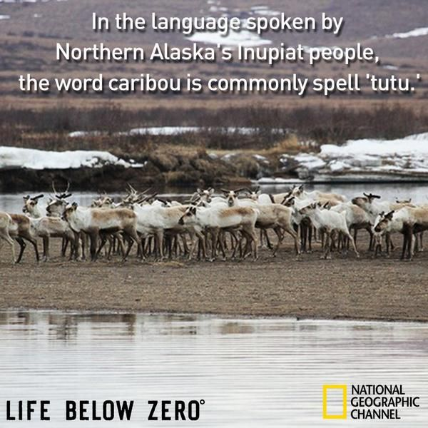 Best Life Below Zero Images On Pinterest Life Below Zero - Most northerly state usa