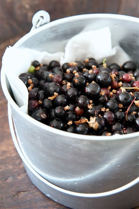 photo of Homemade Blackcurrant Cordial