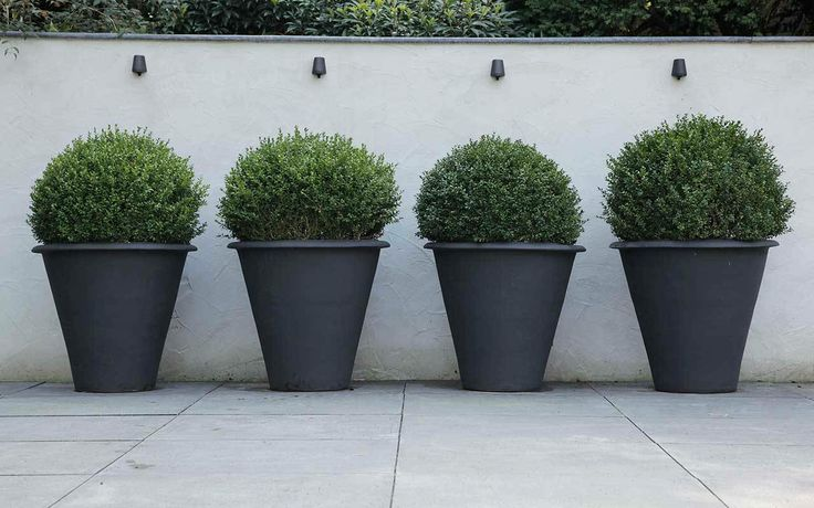 charcoal grey pots and green topiary
