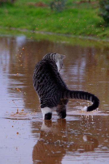 Cat in the rain essay
