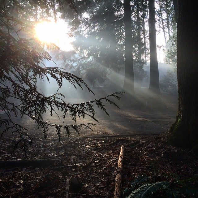 "The sun pokes through the trees in Burnaby, BC whilst photographing for information on the  ""We Regret Nothing"" documentary.  #weregretnothing #wrndoc #wrn #hammetcult #edgarhammet"