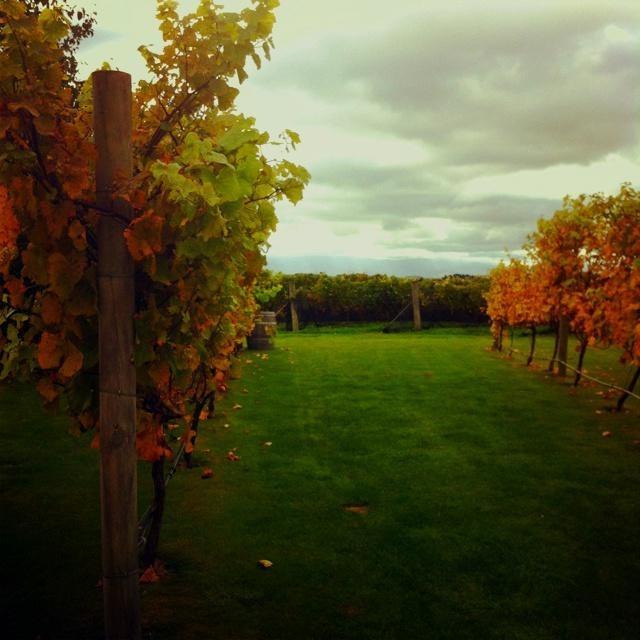 Coney Wines, Martinborough