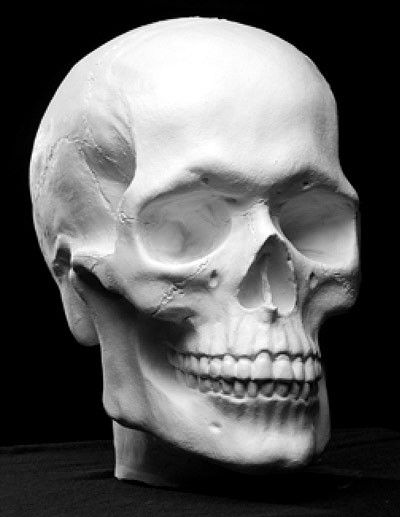 Human Skull - Plaster Anatomical Reference Cast by Philippe Faraut: Demo in book Portrait Sculpting http://philippefaraut.com/collections/art-reference-casts/products/skull