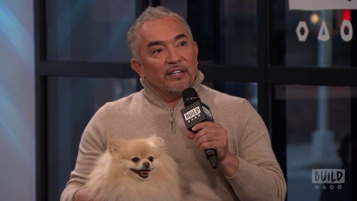 Dog Nation with Cesar Millan joins world-renowned dog behaviorist Cesar Millan and his protégé son, Andre as they hit the road in Nat Geo WILD's new series, ... dog nation cesar milan andre watchlater